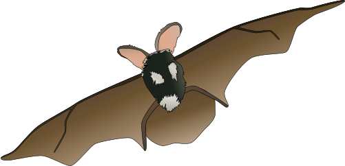 העטלפים