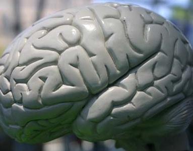 אנשים מעצבנים חסרי מוח