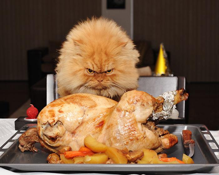 החתול העצבני