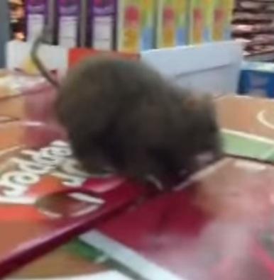 עכבר בחנות