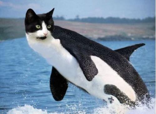 בוא דולפין
