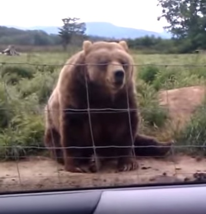 דוב נחמד