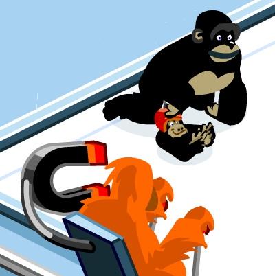 זריקת קוף