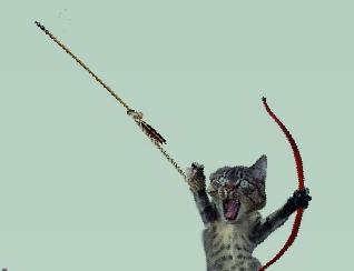 חתול קשת 2
