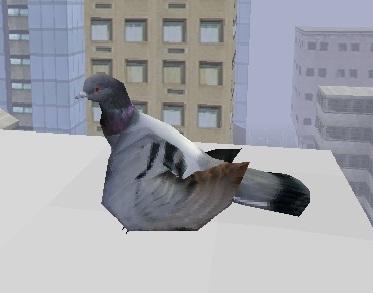 להיות ציפור