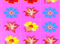 שיגעון הפרחים
