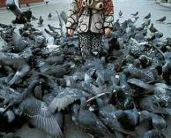 מתקפת ציפורים