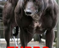 כלב שרירי