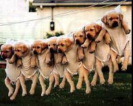 כלבים נקיים