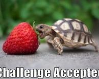 אתגר של ממש