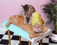 חתול בספא