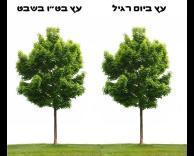גם עצים מתרגשים