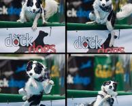 כלב נופל