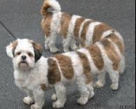 כלב ארוך