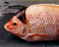 דג מסורק