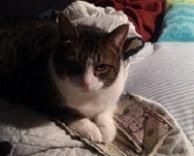 חתול מפיונר..