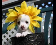 כלב - פרח..