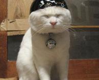 כובע לחתולים