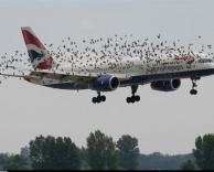 מטוס אטרקטיבי