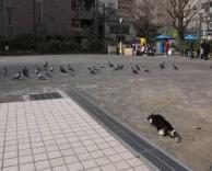 חתול לפני תקיפה