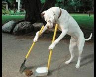 כלב שמנקה אחרי עצמו ?