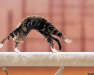 חתול מאומן