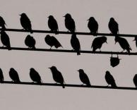 מיצאו את הציפור המבולבלת