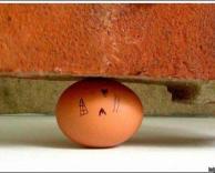ביצה תקועה