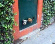 חורי הצצה לכלבים