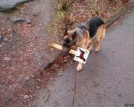 הכניסה לכלבים אסורה