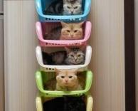 ערימת חתולים