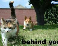 תיזהר! מאחורייך