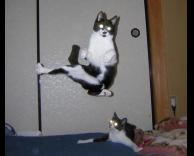 חתולי מטריקס