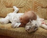 כרית חתול