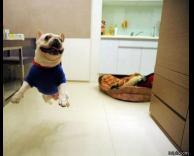 כלב מרחף