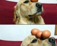 איזון של כלב