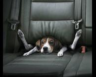 כלב תקוע באוטו