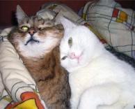 חתולים בסתלבט