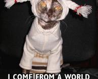 חתול לבוש