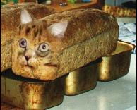 חתולחם