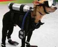 כלב צוללן