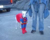 כלב סופרמן