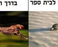 הבדל קטן