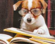 כלב חרשן