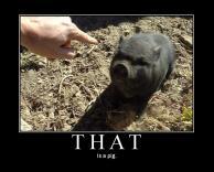 זה חזירון!