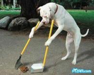 כלב מחונך