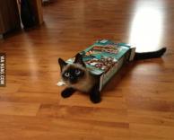 חתלתול בקופסת קורנפלקס :)