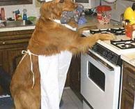 כלב עוזרת