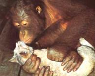 קוף מנשק חתולה