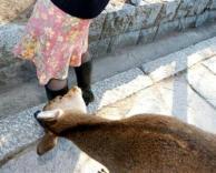 חיה מציצה לילדה